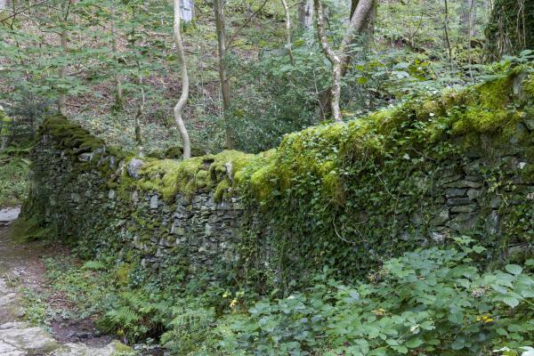 Vegetation management